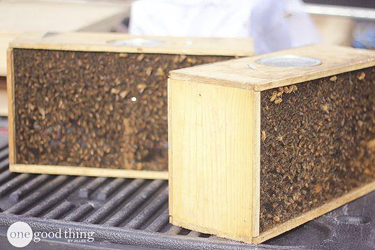 Become A Backyard Beekeeper