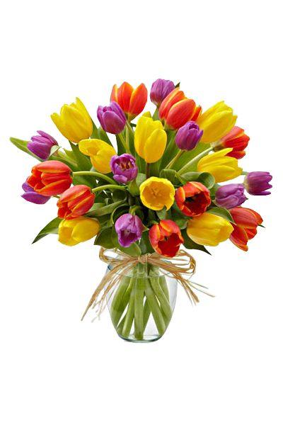 """ТЮЛЬПАН 25 ШТ.. Букет из 25 тюльпанов (40-45 см, голландская луковица) разных цветов в подарочной упаковке """"Радуга"""""""