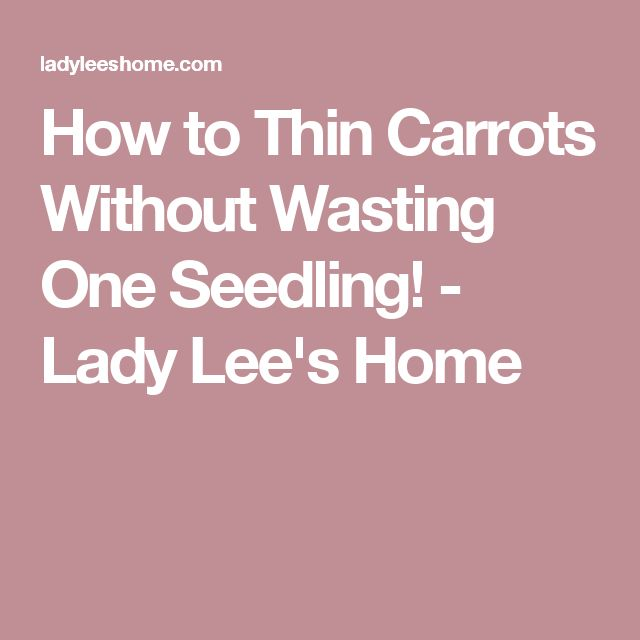 How to Thin Carrots Without Wasting One Seedling! - Lady Lee's Home