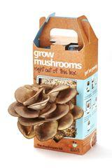 Mushroom Garden | Back to the Roots - Mushroom Kit