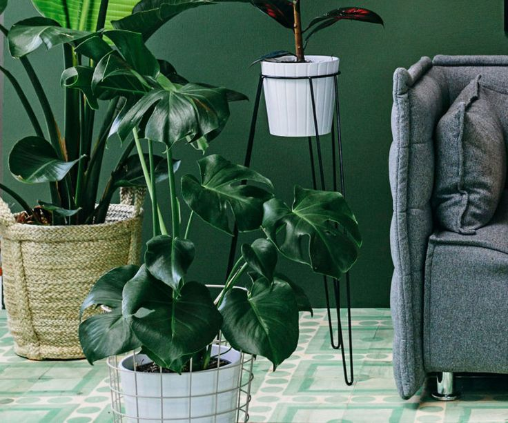 Top 10 indoor plants for a busy household - Homes To Love