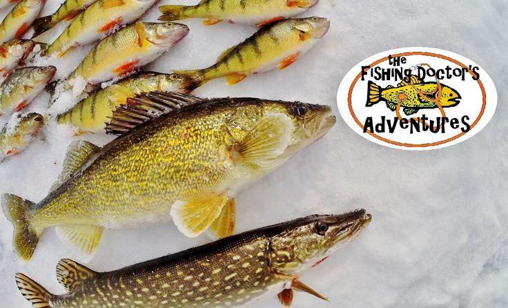 Walleye northern pike and perch ice fishing makwa lake ice for Go ice fish