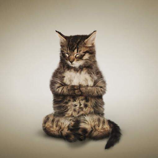 Cute Cats doing Yoga! - Via thenewspatroller.comYogacat, Kitty Cat, Yoga Poses, Inner Peace, Weights Loss Secret, Furries Friends,  Tabby Cat, Yoga Cat, Animal