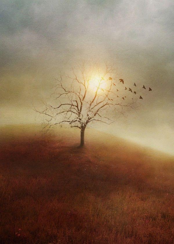 Lone Tree Love I