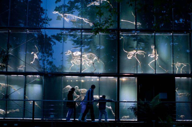 Profitez de la nuit des musées pour découvrir le mur des squelettes du Muséum comme vous ne l'avez jamais vu ! © Ville de Toulouse - P. Nin #visiteztoulouse #toulouse #museum