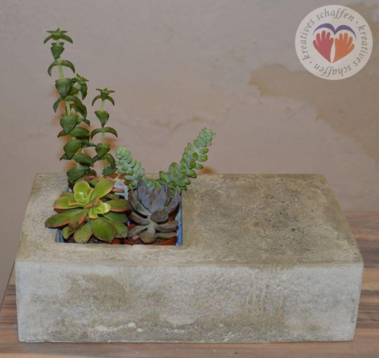 #Beton #Schale #Schüssel #Betonschale #DIY #selbstgemacht #Kreativkurs #Betongießen #concrete #bowl #shell #plants #nature @kreativgraz