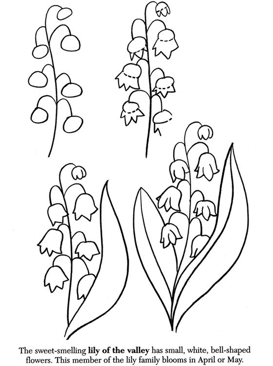 How to draw flowers - lily of the valley