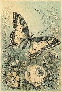 Victorian butterfly & floral illustration.