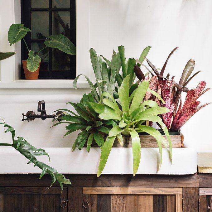 25 Trending Low Light Plants Ideas On Pinterest Indoor