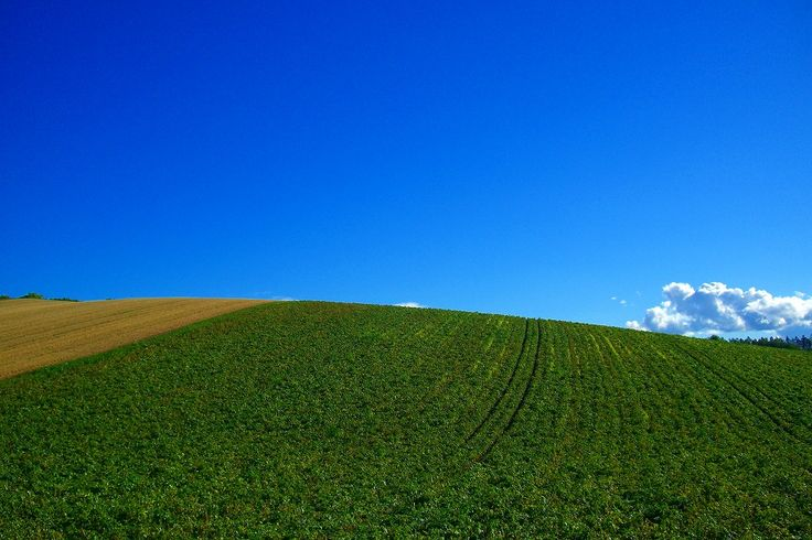 美瑛の丘の風景 - 北海道 「北の国から」美瑛