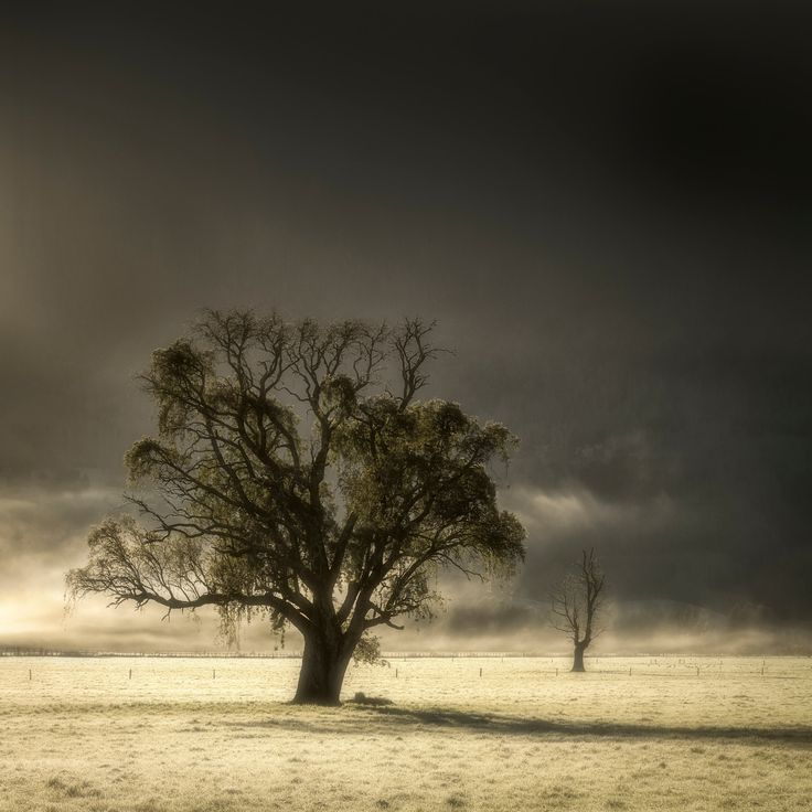 Perseverance - Early on a winter morning in the chilean countryside fog usually covers the landscape till the sun finds its way through it highlighting the silhouettes of old trees that persevere on the frozen prairies. Región de Los Ríos, Chile