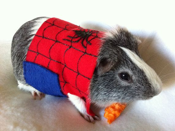 Community Post: 10 Adorable Guinea Pigs Dressed As Tiny Superheroes