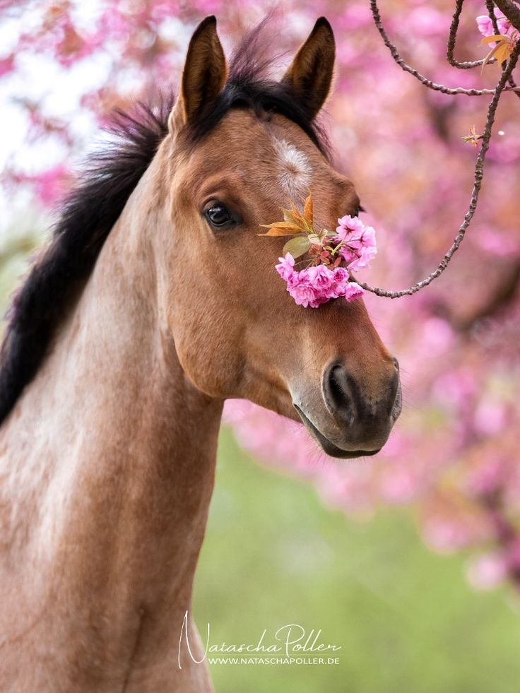 Professionelle Pferdefotografie