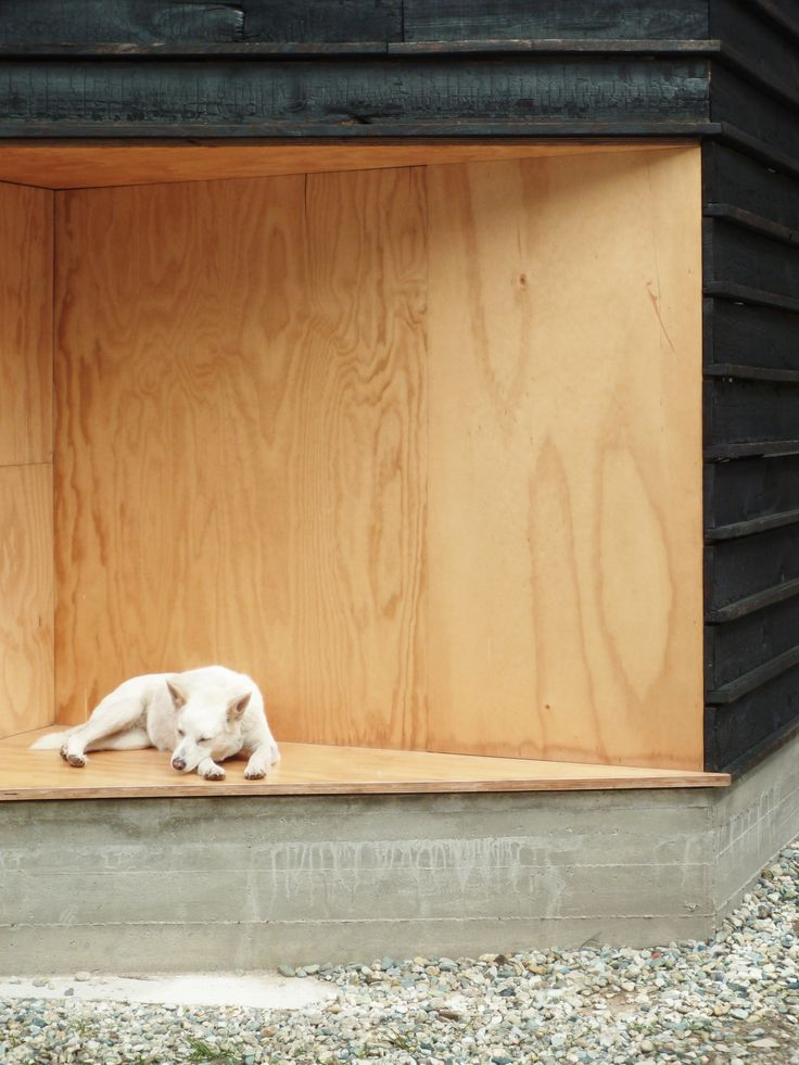 shou sugi ban, charred wood in combination with untreatened pine plywood  Wood and the Dog / StudioErrante Architetture
