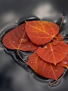 beautiful fall leaves.    http://www.mobiletoones.com