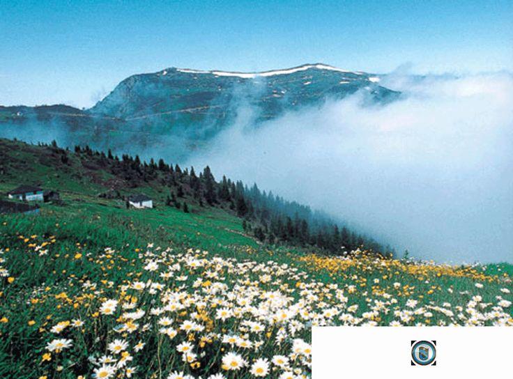 Trabzon Akçaabat Gezisi Yaptınız Mı  http://www.trabzondayim.com/trabzon-akcaabat-gezisi-yaptiniz-mi/  #Trabzon #Akcaabat