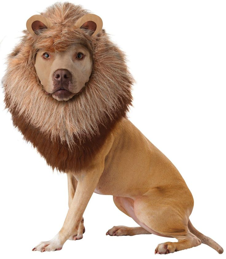 Animal Planet Lion Dog Costume from Buycostumes.com