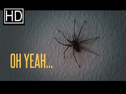 KILL ME NOW!!!   He Sees A Huge Spider On His Wall, But When He Zooms Out? OMG!! — I Love Halloween