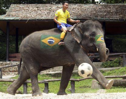Elephant world cup 2014 kicks off