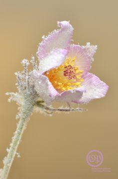 Сон-трава из ревелюра, две новые булавки - Сайт Светланы Ридзель