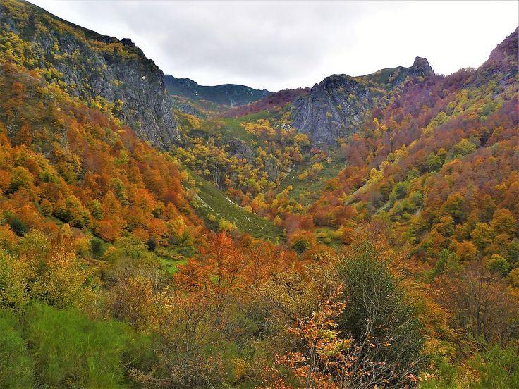 El Paraíso está en Asturias: Parque Natural de Redes Parque Natural de Redes (Asturias). Redes fue declarado Parque Natural en 1996. Se trata de un entorno que alberga extraordinarios bosques de hayas y robles de tal importancia que poco después en 1999 se incorporó como Lugar de Importancia Comunitaria (LIC) a la Red Europea Natura 2000. Desde 2003 es Zona de Especial Protección para Aves (ZEPA). Pero sobre todo tiene el máximo nivel de protección medioambiental desde que en 2001 la UNESCO…