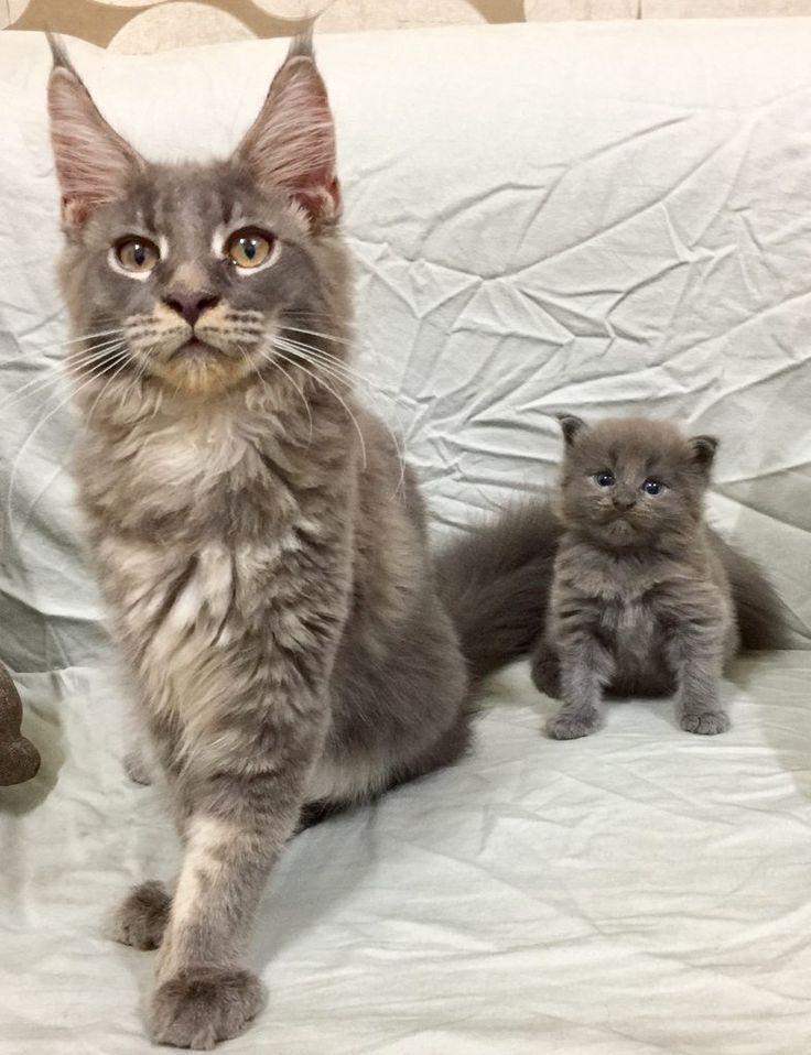 Big Kit and Small Kitter