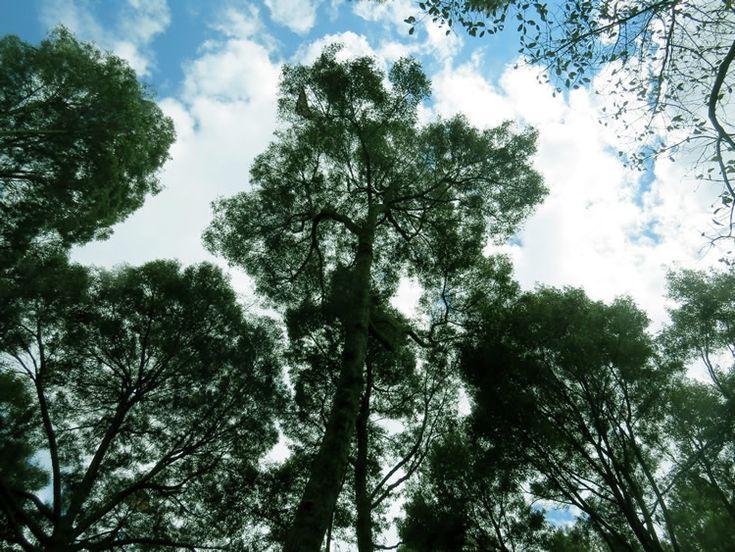 Así se ve el cielo si te acuestas en el pasto en el Parque Simón Bolívar: http://www.tuhotelbogota.co/category/parques/parque-simon-bolivar/