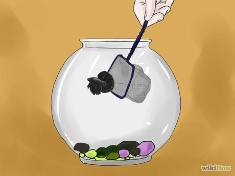 25 best betta fish bowl ideas on pinterest for Cleaning fish bowl