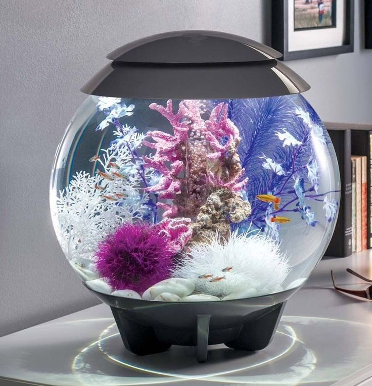 17 best ideas about biorb fish tank on pinterest plant for Aquarium decoration set