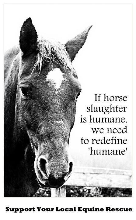 "If horse slaughter is humane, we need to re-define ""humane"". ...........click here to find out more http://googydog.com"