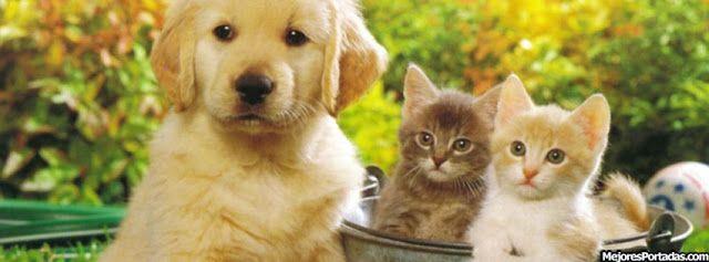 bonitas+mascotas