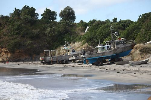 Chatham Islands New Zealand