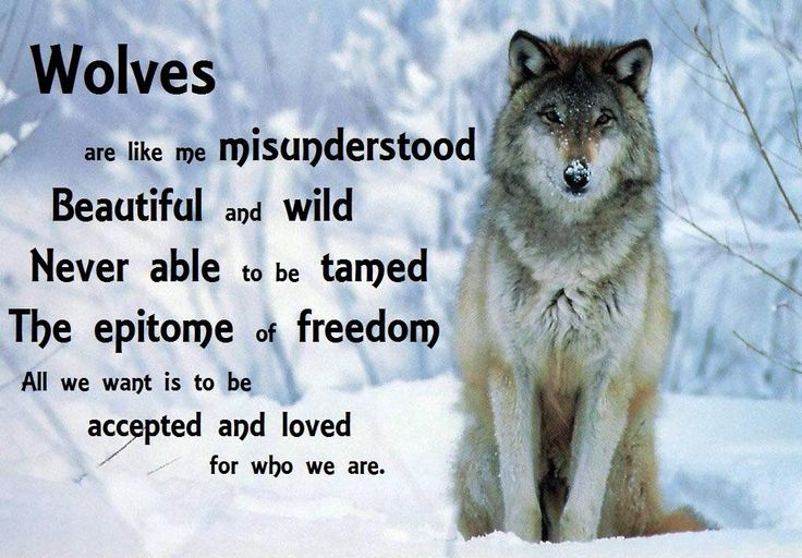 We all are misunderstood. People expect us to be perfect but we're not. Wolves aren't perfect, their Alphas aren't ready to lead a hunt if no one supports him. We can't lead an army with no one to lead.         That's just me... :P