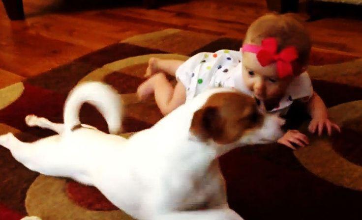 Koira opettaa vauvaa ryömimään!