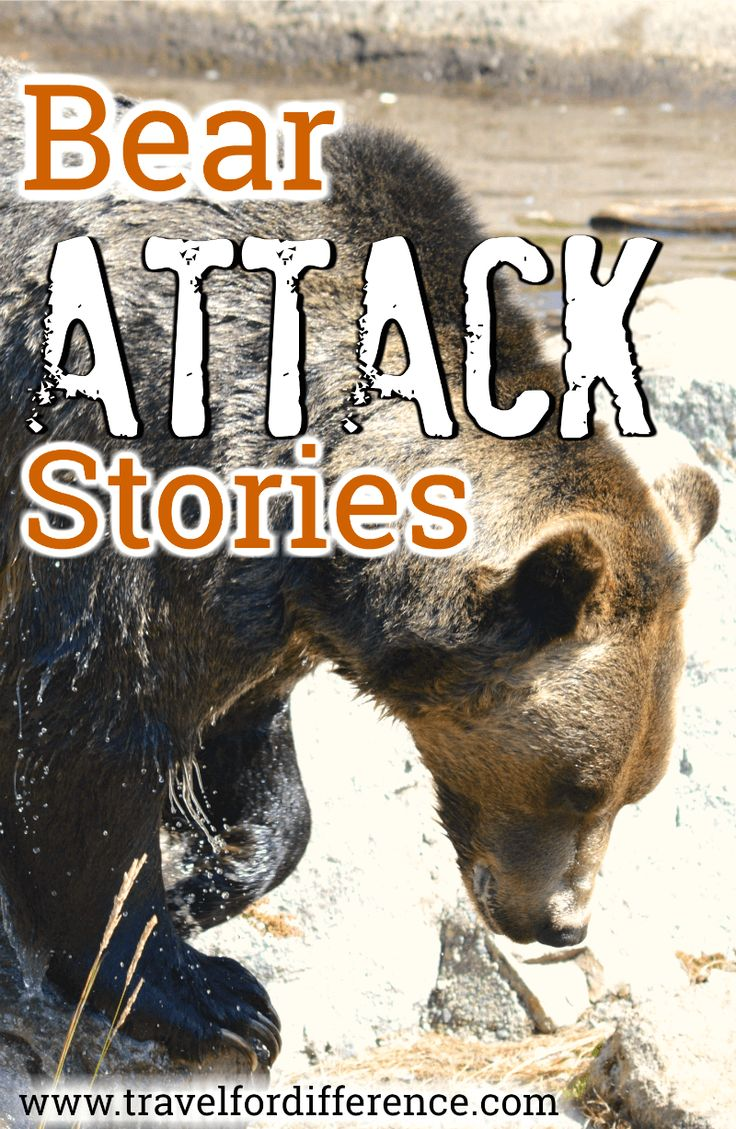 Bears can be dangerous, there\'s no doubt about it! Here are a few scary bear attack stories that I learnt during my Canada trip. #BearAttack #BearAttackStories #Canada
