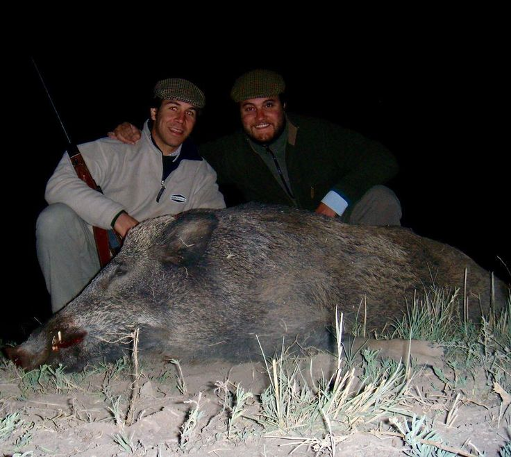 Hunting wild boars waiting at night its always exciting! Congratulations to our hunter! #caza #hunt #hunting #spainoutfitters #wildboar #jabali #tusker  http://riflescopescenter.com/category/hawke-riflescope-reviews/