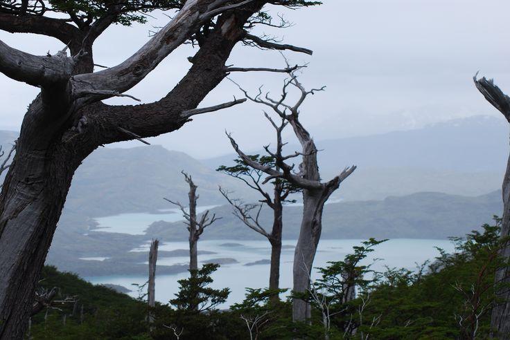 Diversidad de paisajes en Torres del Paine