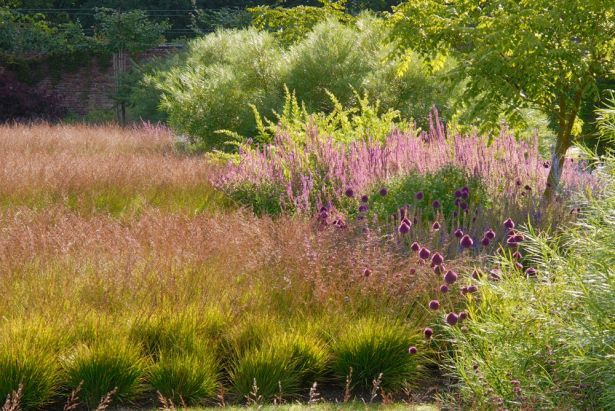 149 best images about glorious grasses on pinterest for Piet oudolf planting schemes