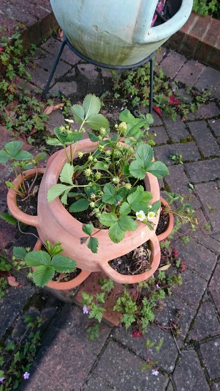 Our Kitchen Garden 1000 Images About Our Kitchen Garden On Pinterest Tomato Seeds
