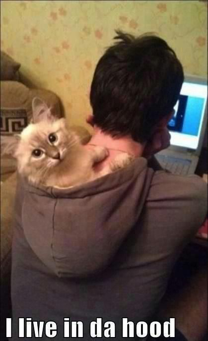 #lol- I live in da hood!  LOVE this cute as heck - don't know who is cuter, the kitten or the male that allowed him to do it.
