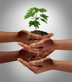 picture of symbols - Community cooperation concept and social crowdfunding investment symbol as a group of diverse hands nurturing a sapling tree with roots wrapped and connecting the people together - JPG