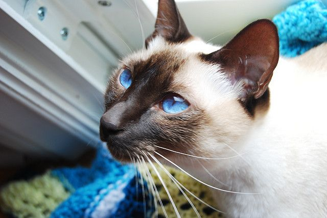 The bluest peepers.