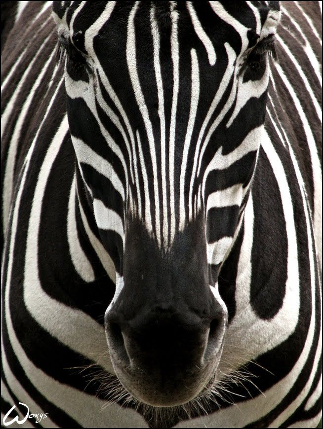 bilateral symmetry in animals - photo #9