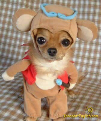 :)Puppies, Chihuahuas, Halloween Costumes, Funny Pictures, Dogs Costumes, Funny Animal, Funny Dogs Pictures, Dogs Funny, Little Dogs