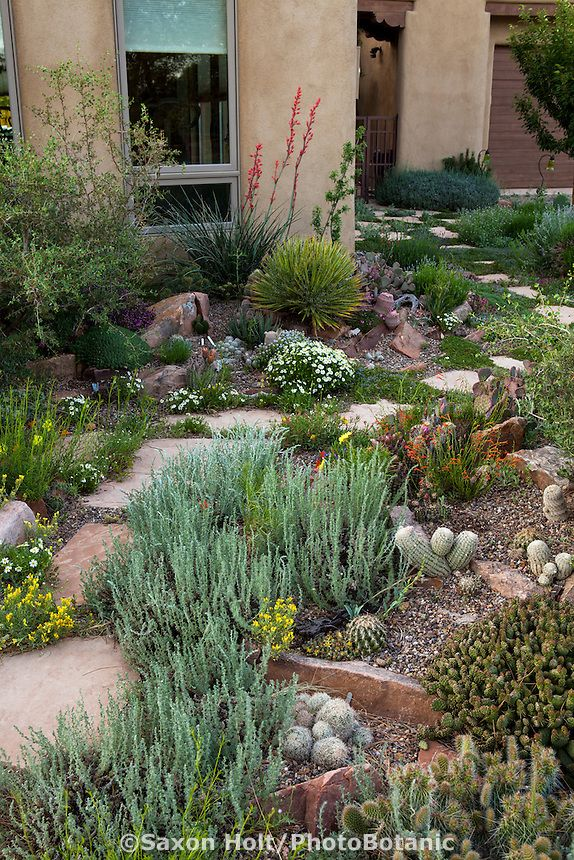 Stepping Stone Path Through David Salman New Mexico Xeric Garden With Gray  Foliage Artemisia Frigida (Fringed Sage) | Xeric Gardening | Pinterest |  Stepping ...