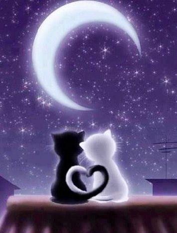 Cats under moon