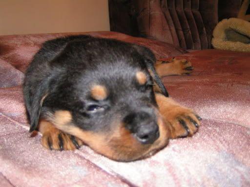 Kenay, six weeks old in 2004.