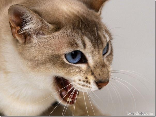 Gato amargado (y hambriento) le metió con todo a un caballo (video + está loco) - http://www.leanoticias.com/2013/08/13/este-gato-se-obstino-y-ataco-con-todo-a-un-caballo-video/