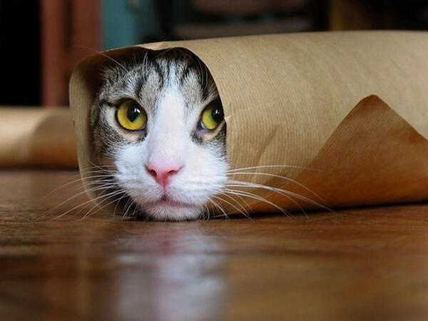 """""""Shhh. I'm hiding"""""""