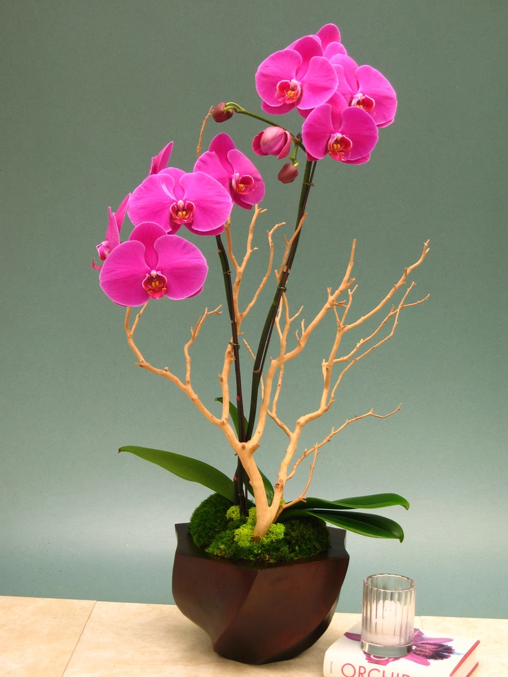 Orchids with manzanita in wood turned container